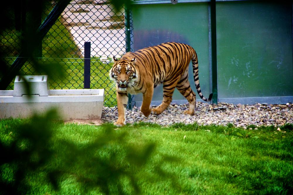 Dream Interpretation Zoo