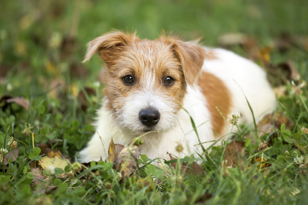 Cute happy pet dog puppy waiting in the grass credit iStock/PA