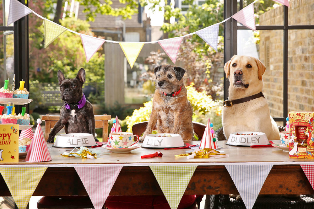 3 dogs at a party stood at table waiting to be fed party food