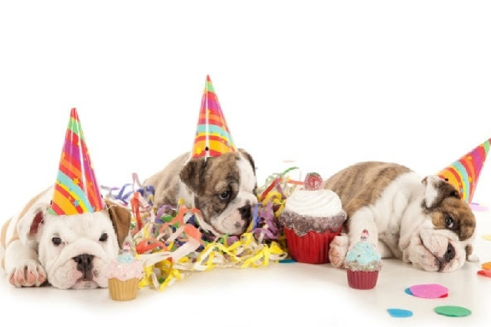 Brits love to pamper their pets on their birthday