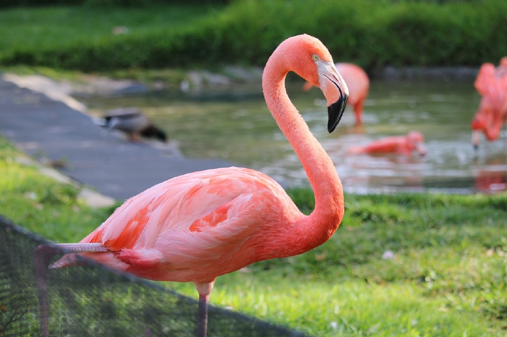 We find out what it means to dream about a flamingo