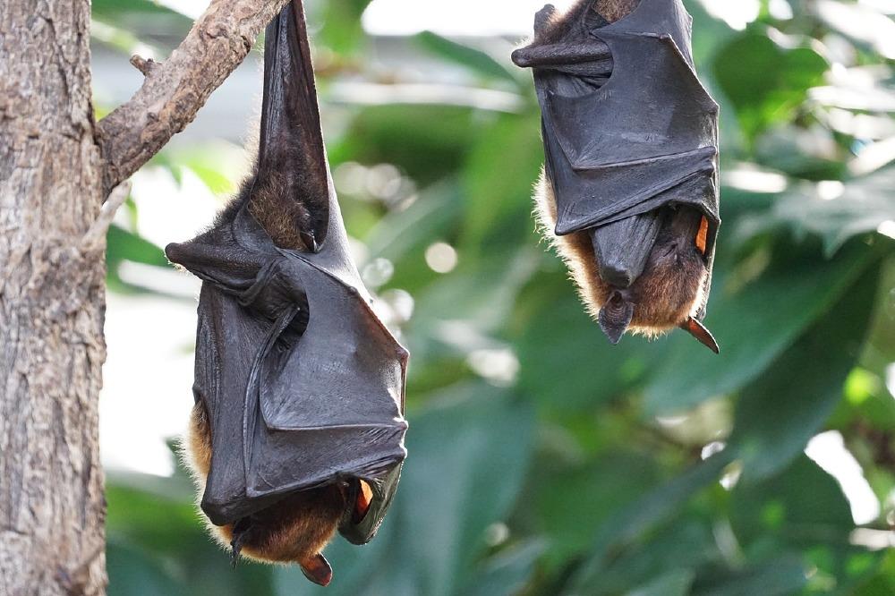 Dream Interpretation Bats