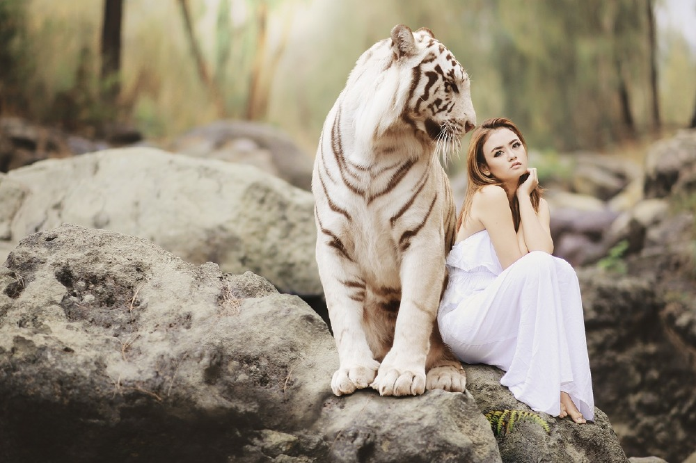 Dream Interpretation Tiger