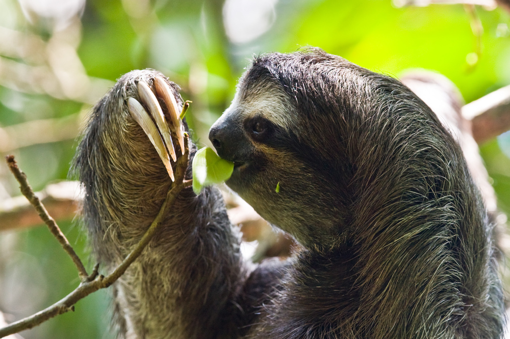 We find out what it means to dream about a sloth