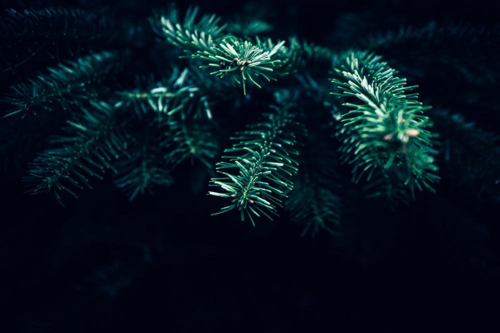 Dream Interpretation Christmas Tree