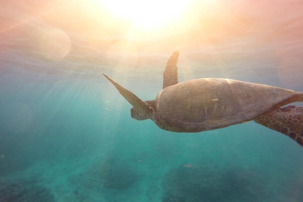 Dream Interpretation Turtle
