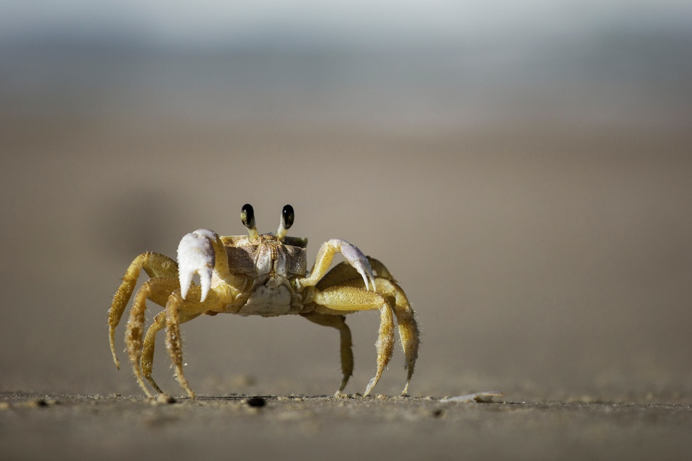 We find out what it means to dream about a crab