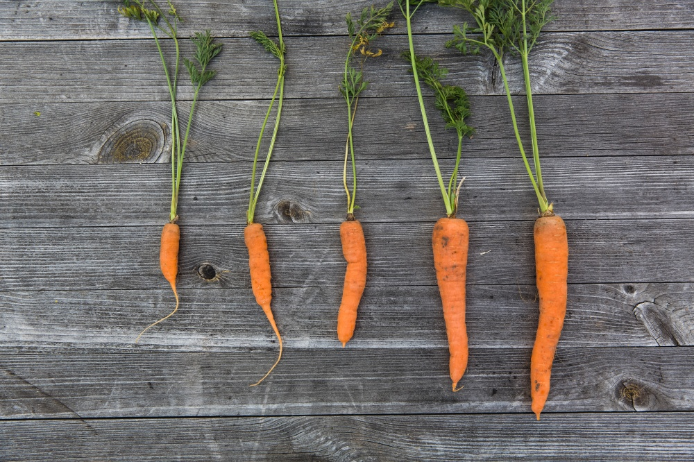 We find out what it means to dream about carrots