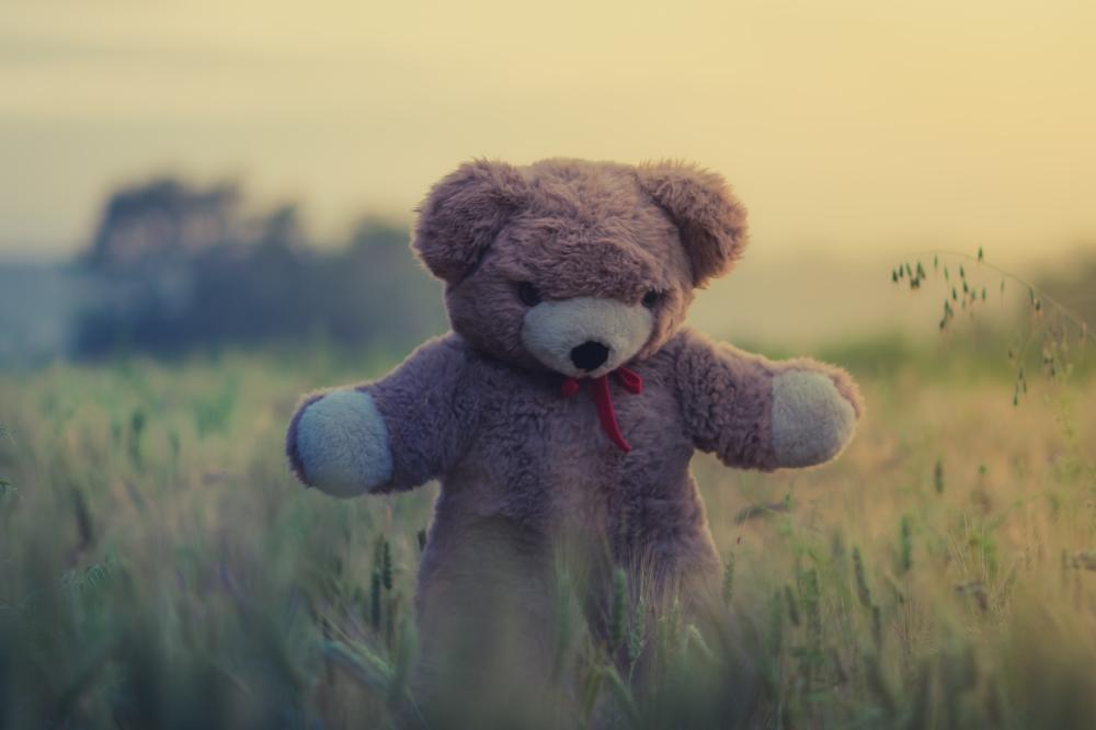 Dream Interpretation Teddy Bear
