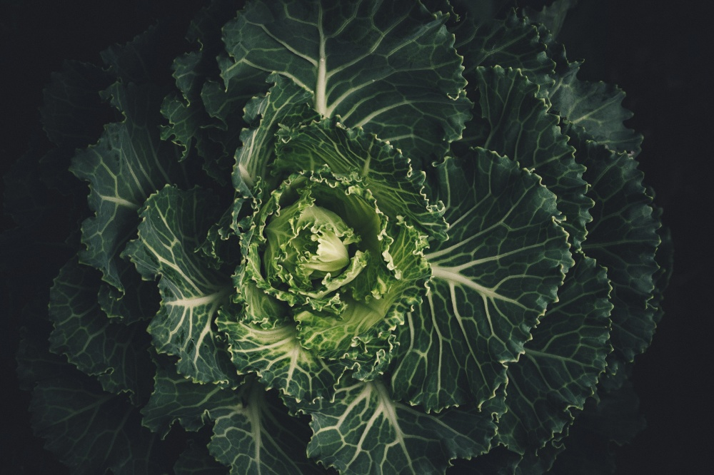 We find out what it means to dream about cabbage