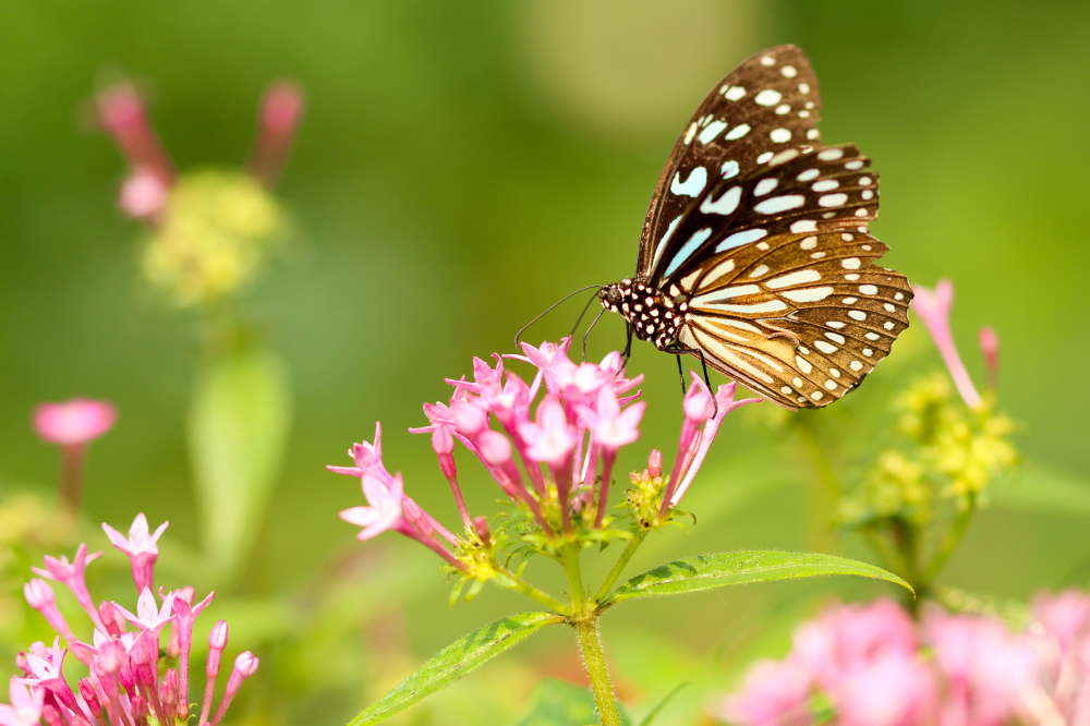We find out what it means to dream about butterflies