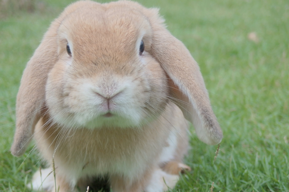 We find out what it means to dream about a rabbit