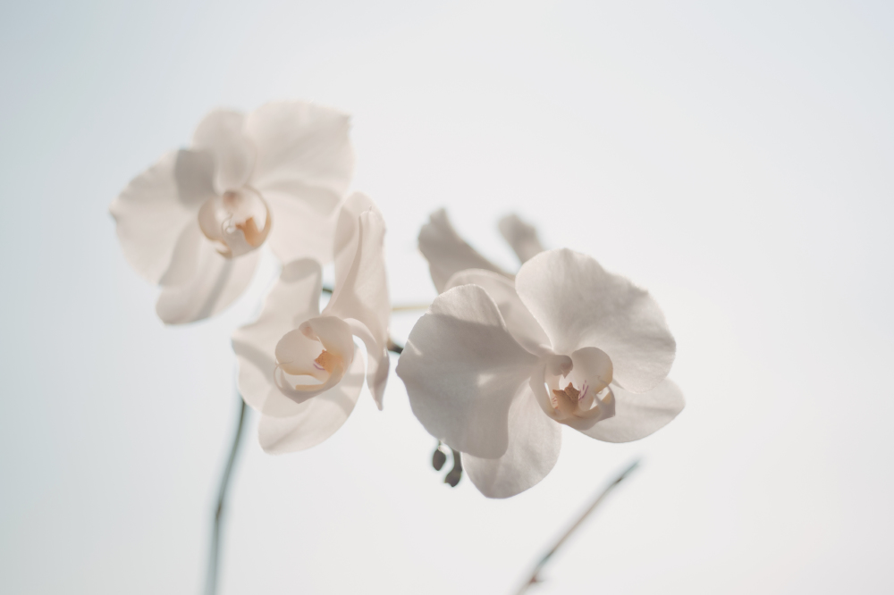 Dream interpretation orchid we find out what it means to dream about an orchid mightylinksfo