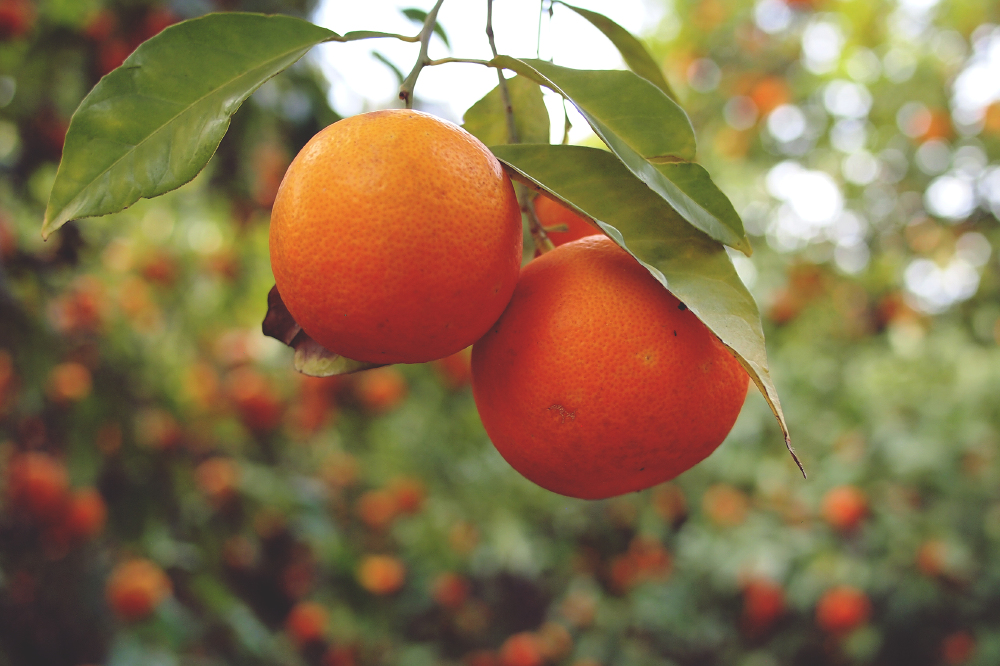 We find out what it means to dream about oranges