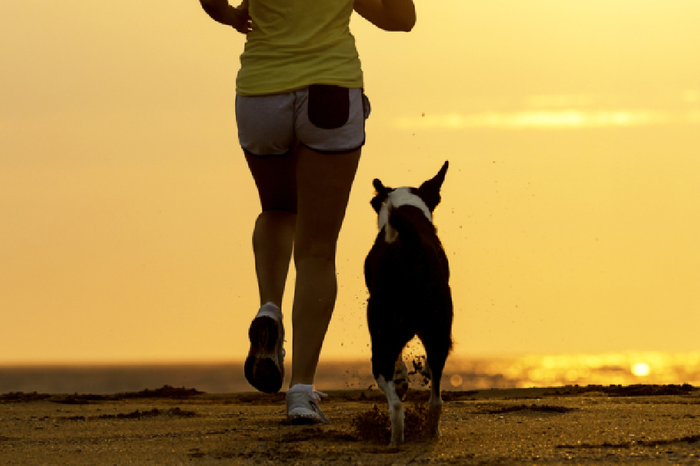 Get moving with your dog this New Year