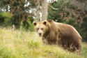 Feeding the bears is a massive task as they eat up to 1.5 tonnes of food daily