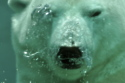 Virtual polar bears are featured in the new show