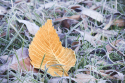 Winter garden: looking after your lawn in colder weather