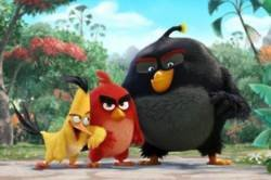 The Angry Birds Movie First Official Trailer
