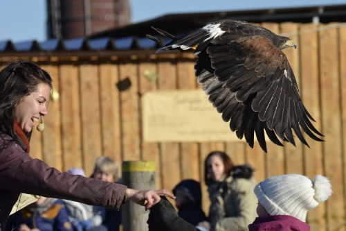 We find out what it means to dream about an eagle