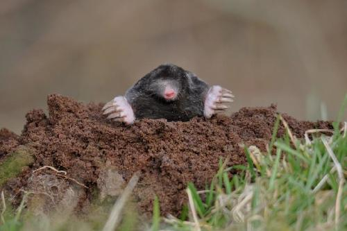 mountain out of a mole hill What is make a mountain out of a molehill (phrase) make a mountain out of a  molehill (phrase) meaning, pronunciation and more by macmillan dictionary.