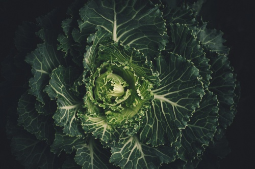 What does it mean when you dream about a cabbage?