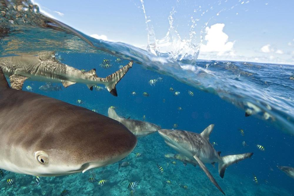 Man unknowingly sleeps above sharks