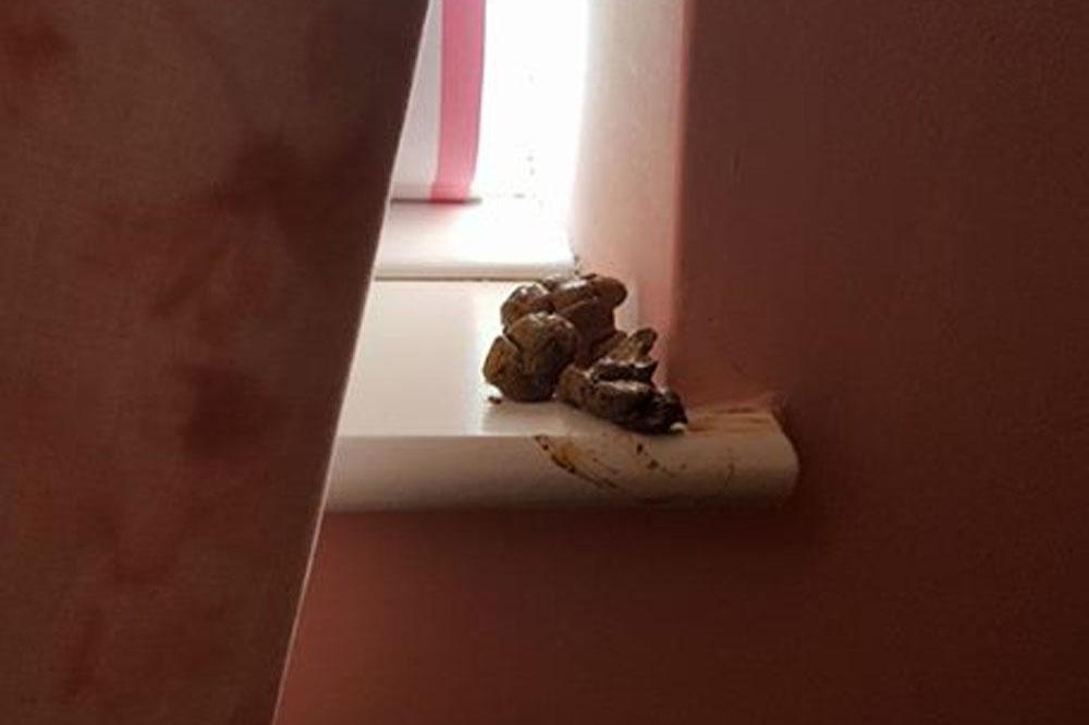 Poo on window sill (c) Facebook