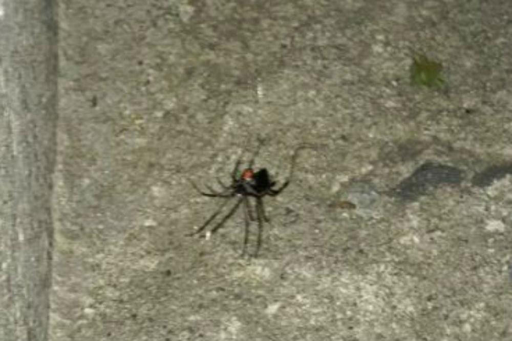 Woman reports plastic spider to RSPCA