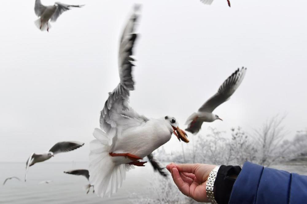 Thieving seagull snatches packet of crisps from bakery