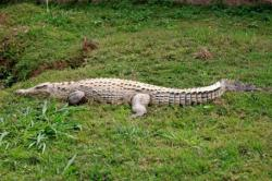 Crocodile named Michael Jackson shot dead