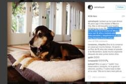 Salma Hayek's dogs crash wedding