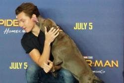 Tom Holland takes dog to film photo call