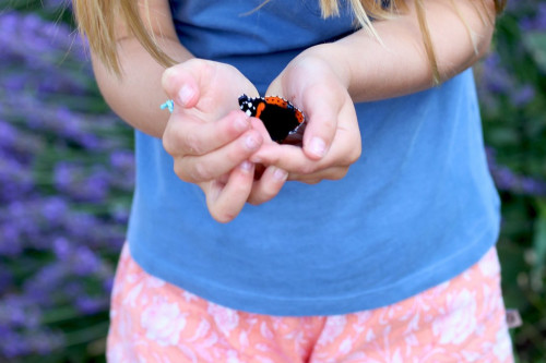 Princess Charlotte takes a butterfly to its cradle to raise awareness of the large number of butterflies