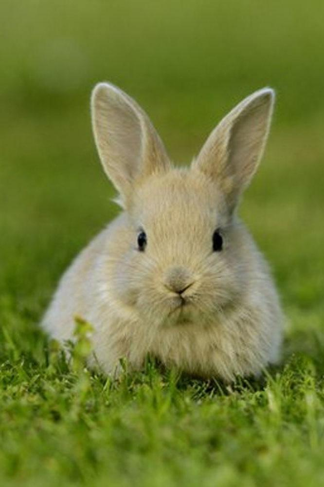School cancels sports day after rabbit invasion