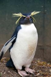 Gay penguins to have baby?