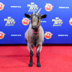 A goat attends the MTV Movie + TV Awards 2020