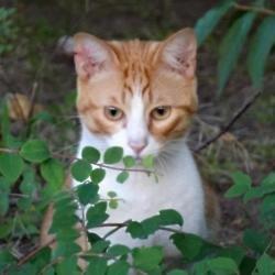 Cat plea goes viral