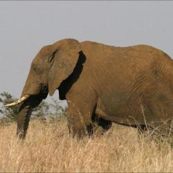 Elephant to get contact lenses