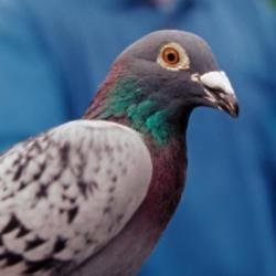 A woman was fined £150 after feeding a bit of sausage roll to a pigeon