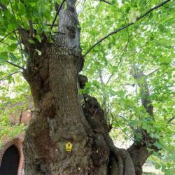 Woman lives in tree for 10 months