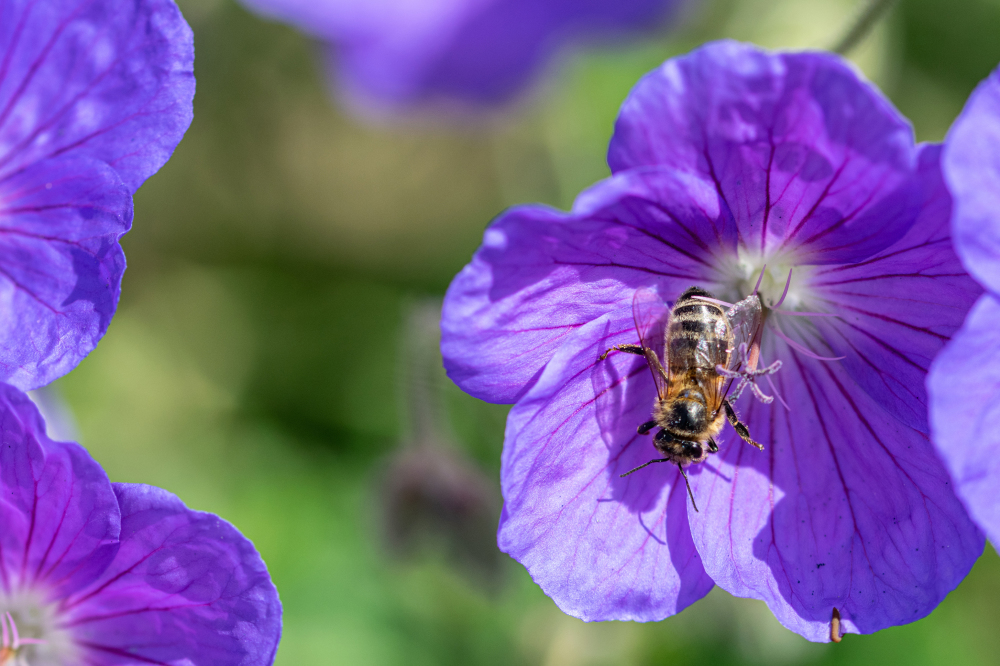 National Insect Week: How to attract bees and butterflies to your garden