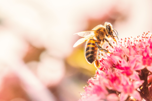 World Bee Day: 7 ways to support bees in your garden