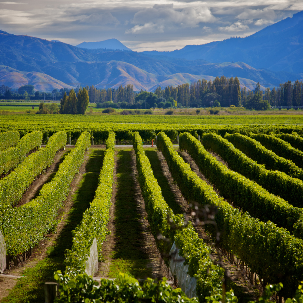 Marlborough is New Zealand's main wine producing region (iStock/PA)