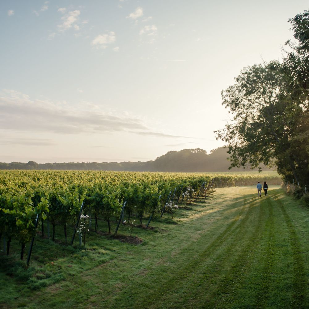 The Gusbourne vineyard, Kent (Gusbourne/PA)