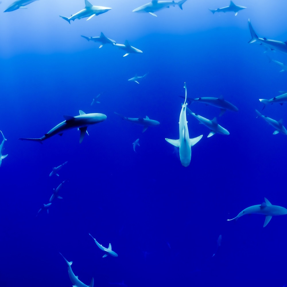 We find out what it means to dream about sharks