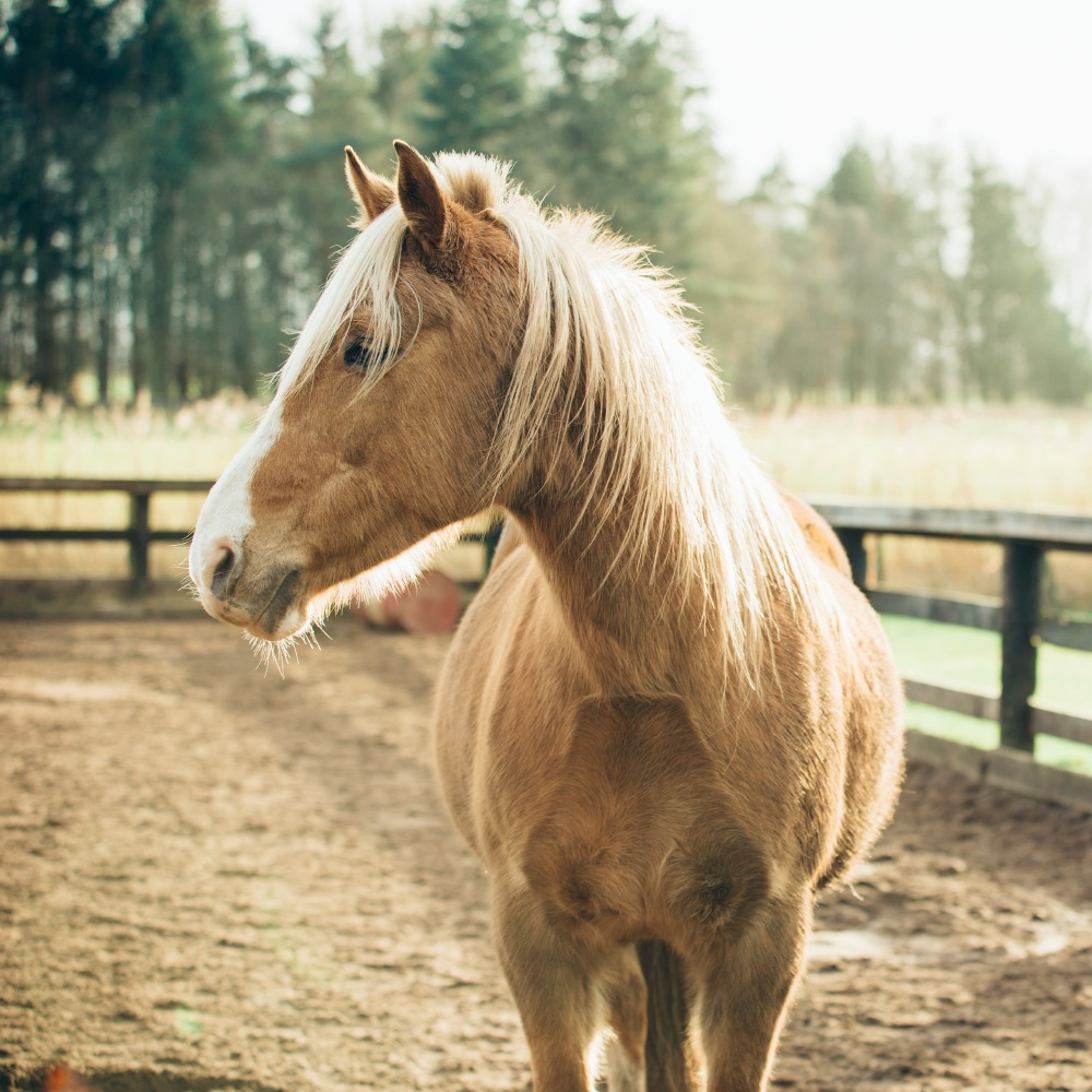 We find out what it means to dream about a horse
