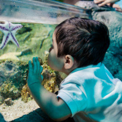 Seven reasons to take your baby to an aquarium