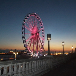 The Brighton Wheel was illuminated pink last night