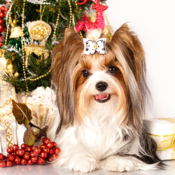 Brits will shell out £595 million on Xmas gifts for pets